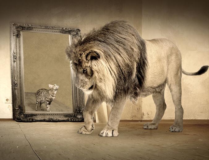 Roaring Kitty is a Wall Street lion