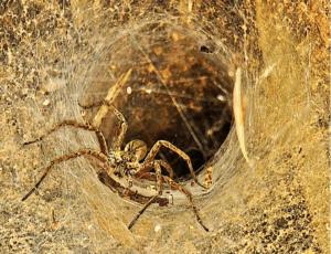 scary spiderweb