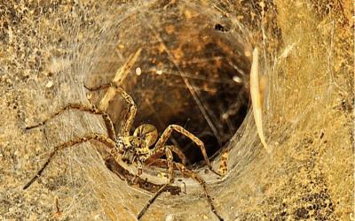 ICAP, the spider in the Cum/Ex web